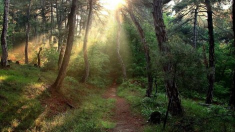 Τυχερό - Σουφλί - Δάσος Δαδιάς